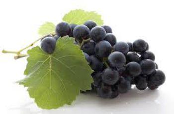 Illustration : Le raisin : le super fruit de la rentrée